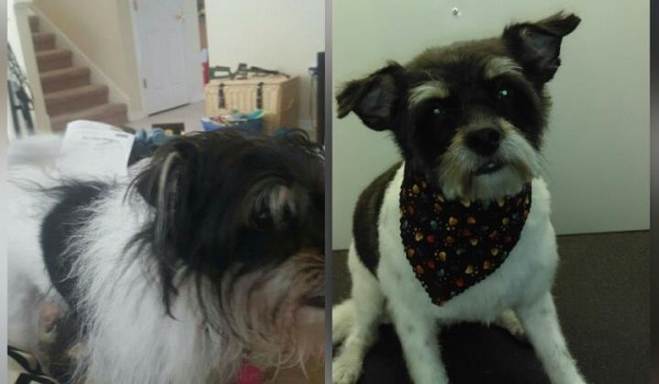 Hope Before and After Groom service Very Important Pet Care